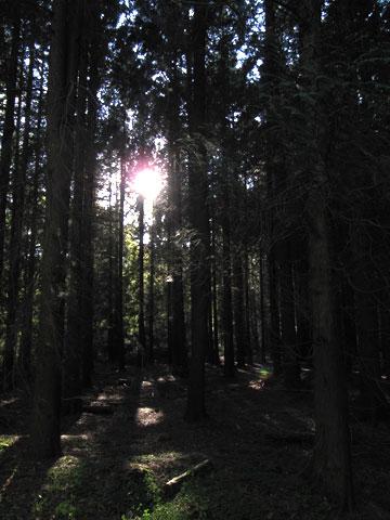01.10.2011  Im Tiergarten Wolbeck