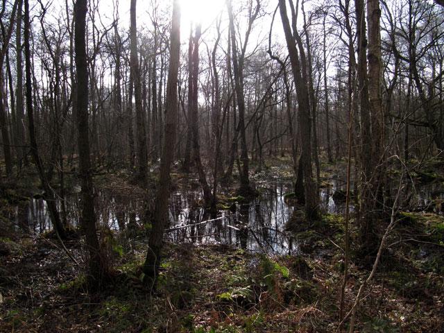 26.02.2012  Venner Moor