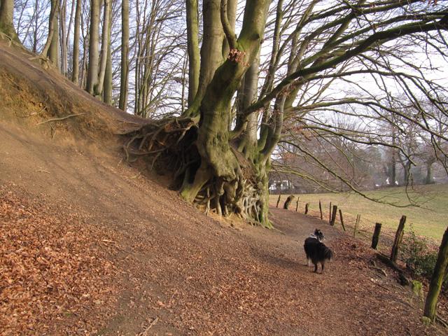 02.03.2012  Schieflage