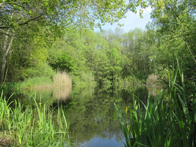 17.05.2012  Teich in der Hohen Ward
