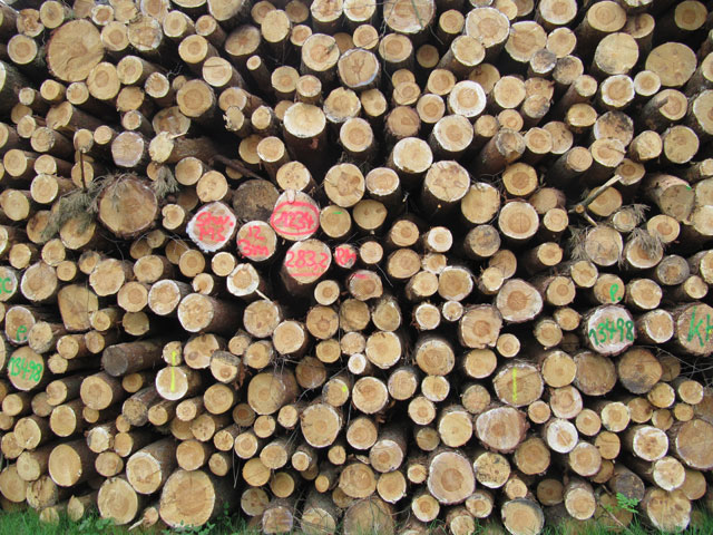 20.05.2012  Holz