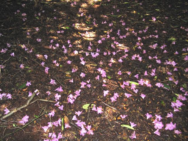 07.06.2012  Nach der Rhododendronblüte