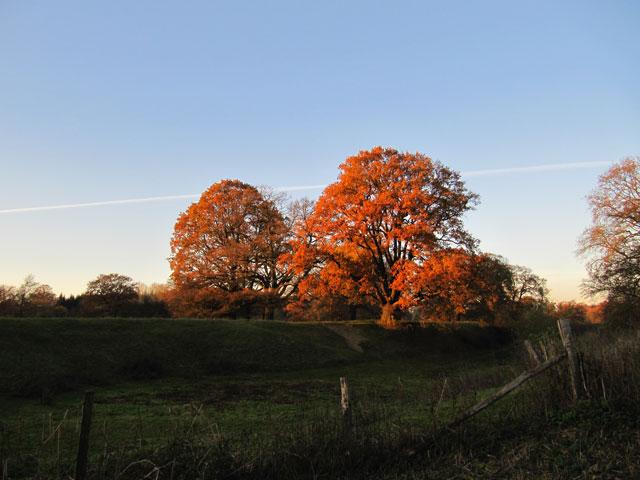 14.11.2012  Rote Bäume