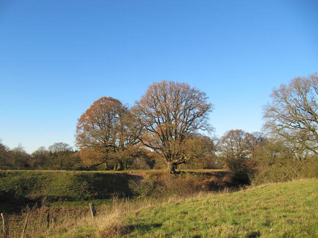 22.11.2012  Bäume