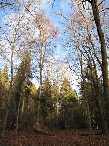 29.12.2013  Wolbeck, Tiergarten