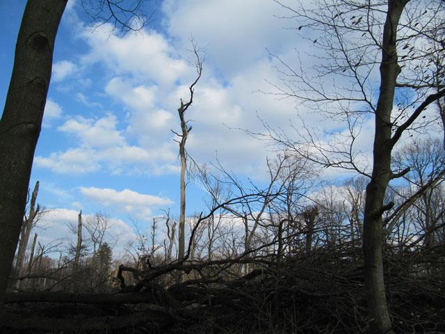 02.03.2014  Tote Bäume
