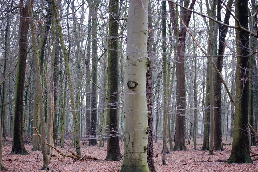 25.02.2015  Wald