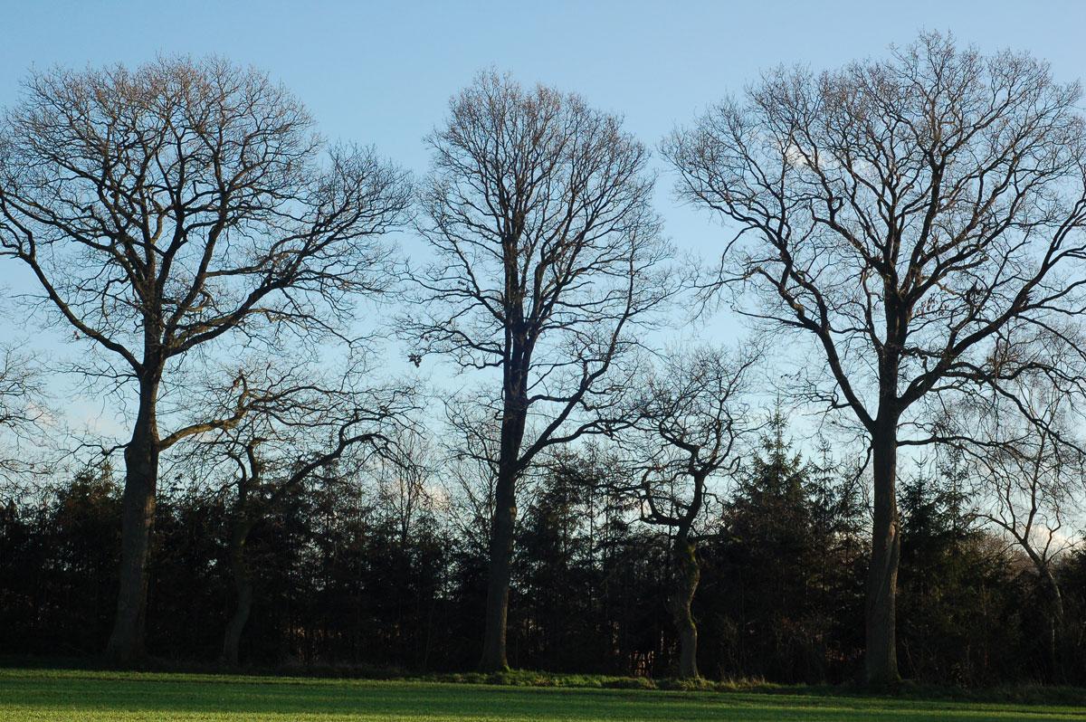 10.01.2016  Bäume