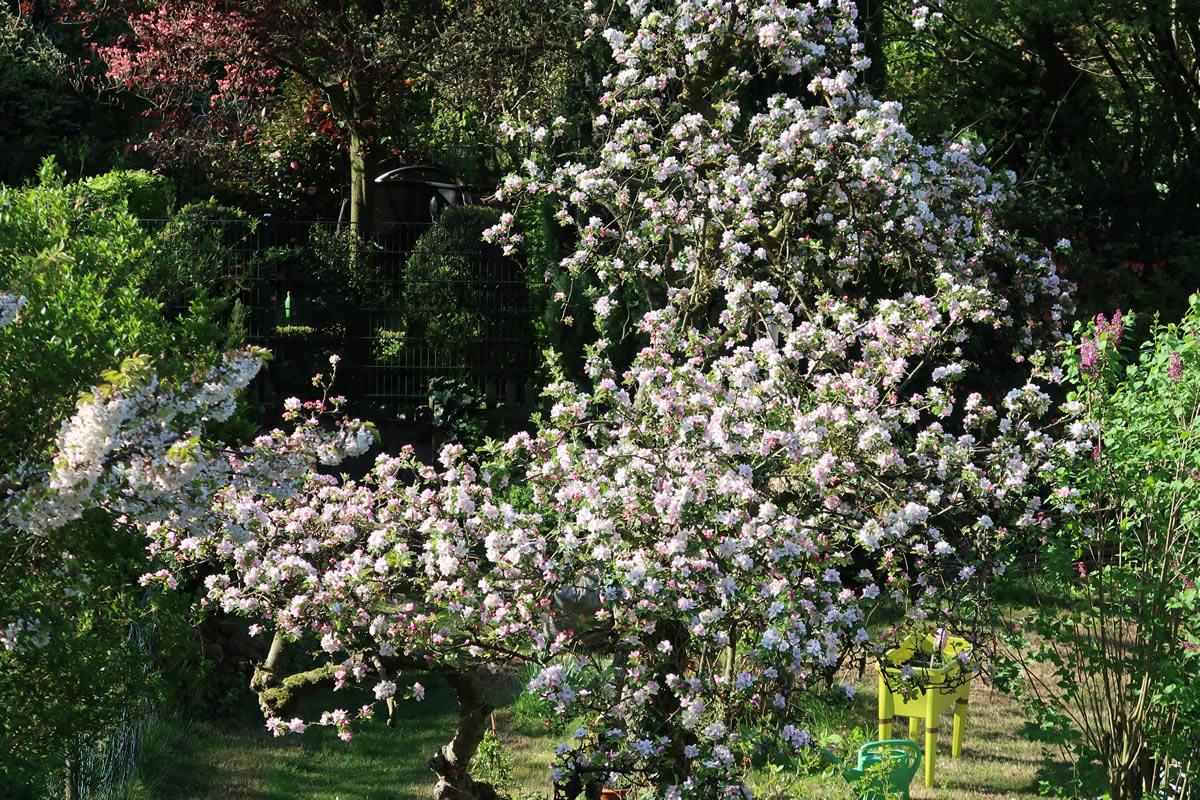 19.04.2020  Apfelbäume