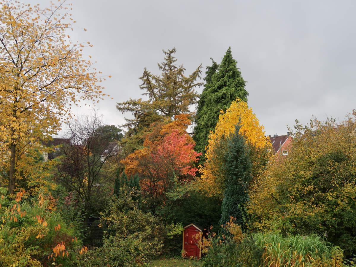 25.10.2020  Herbst