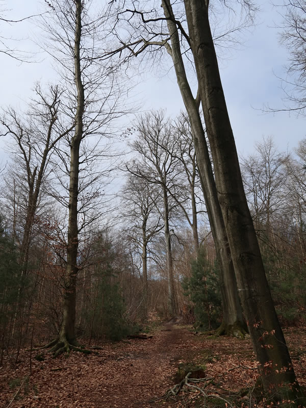 20.03.2021  Waldweg