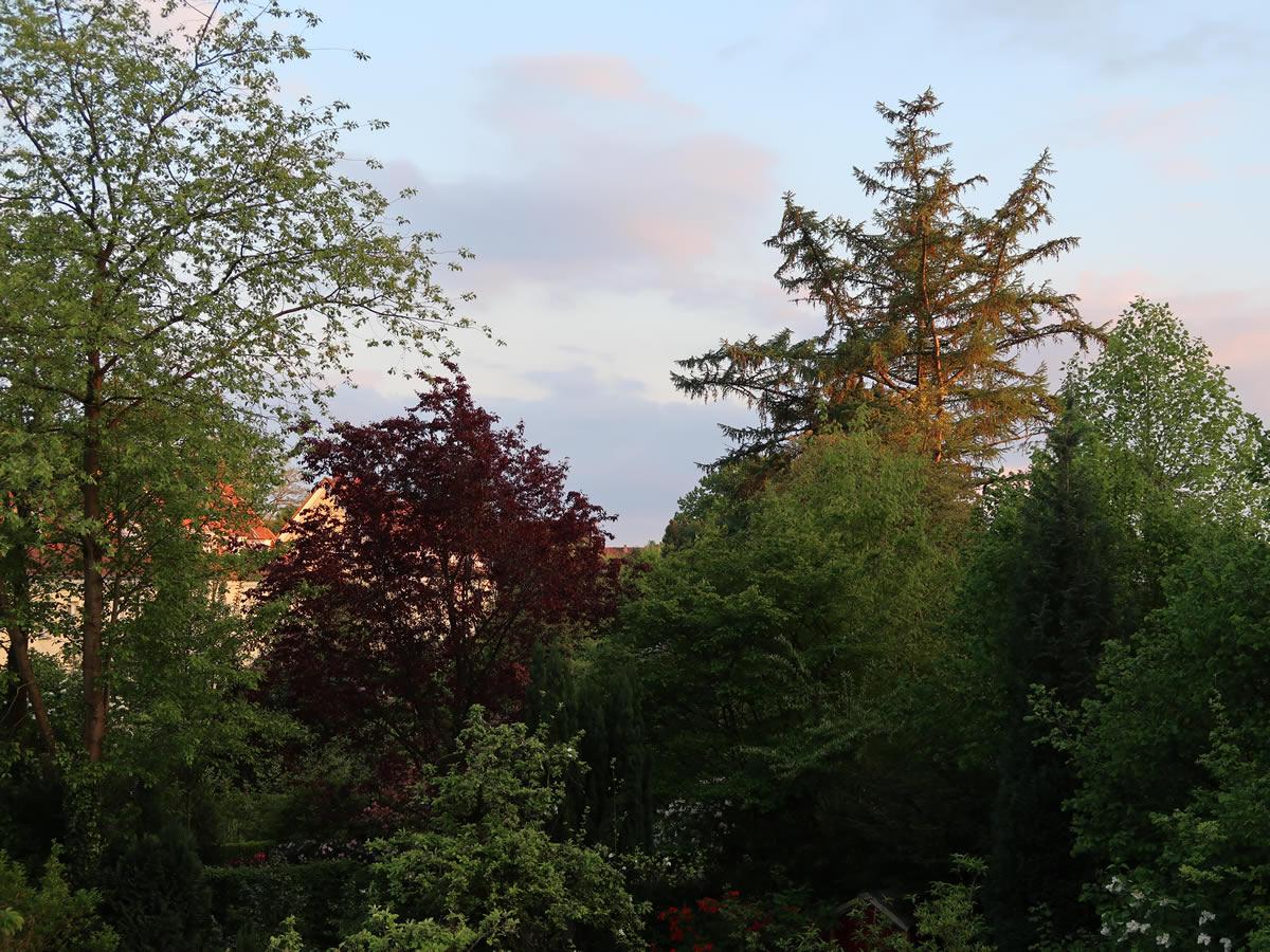 18.05.2021  Bunte Bäume