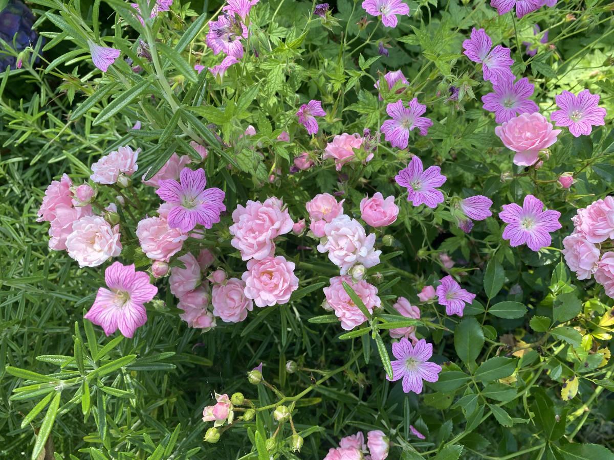 17.07.2021  Blumen