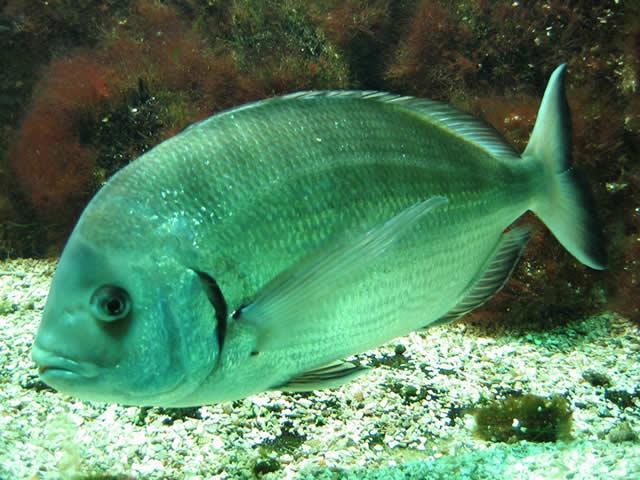 04.02.2005  Fisch