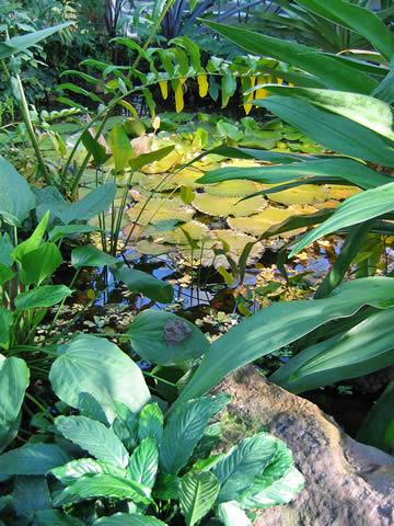 05.02.2005  Seerosen im Botanischen Garten